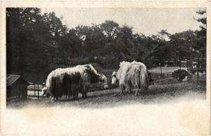 CPA PARIS 16e-bétail (326255)