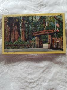 Antique Postcard, Entrance to Big Trees Park, Santa Cruz County, Calif.
