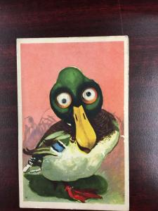 Google Eye Mallard Duck Greeting Antique Postcard K58886