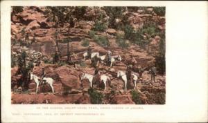 Grand Canyon AZ People on Mules 1902 Detroit Publishing Postcard 6325
