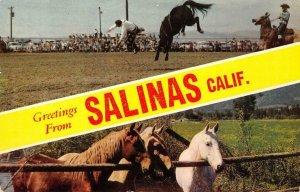 SALINAS, CA Rodeo Cowboys Horses Monterey County 1959 Chrome Vintage Postcard