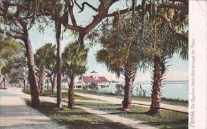 Florida Daytona Yacht Club Through The Palms 1912