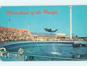 Pre-1980 MARINELAND SCENE Palos Verdes - Los Angeles California CA AF9619