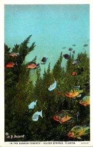 Florida Silver Springs Underwater Scene In The Sunken Forests Curteich