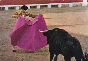 Bull Fighting Toros Citation Of Cape