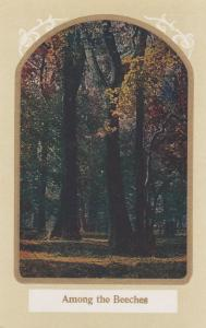 Among The Beeches - Trees in Forest Setting - DB