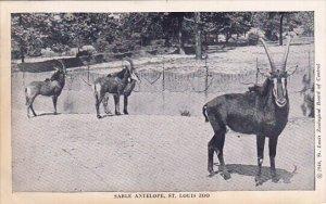 Sable Antelope Saint Louis Zoo Saint Louis Missouri 1946