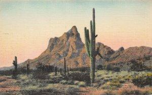 Saguaro Cactus at Picacho, Arizona, Early Hand Colored Linen Postcard, Unused