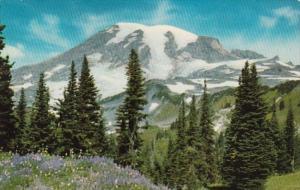 Washington Mt Rainier From Mazama River Overlooking Paradise Valley