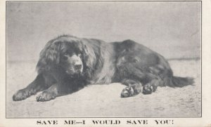 DOG ; Save Me - I would save You! , 00-10s