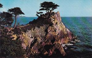 California Monterey Peninsula Midway Point Seventeen Mile Drive