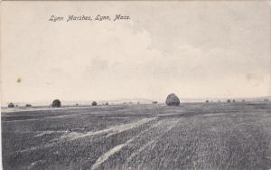 Lynn Marshes, LYNN, Massachusetts, 1900-1910s