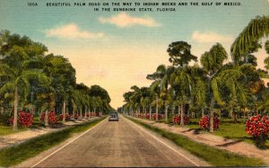 FLorida Beautiful Palm Road On The Way To Indian Rocks and Gulf Of Mexico