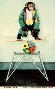 Missouri St Louis Zoo Chimpanzee Show Starring Oofie