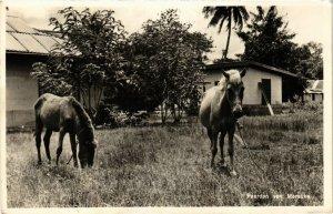CPA INDONESIA Paarden van Merauke (341505)