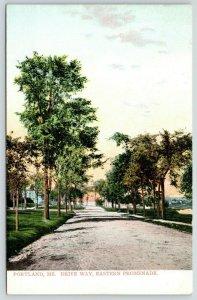 Portland Maine~Eastern Promenade Driveway~Tree Lined Dirt Road~Sunset~c1910