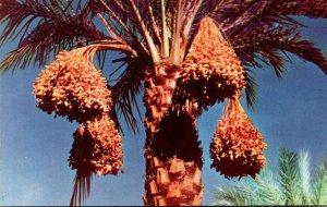 Arizona Date Clusters
