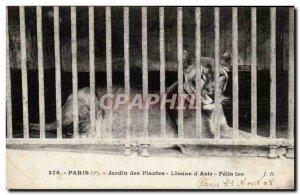 Paris - 5 - Garden Plants - Lioness d & # 39Asie - Asian Lion Old Postcard