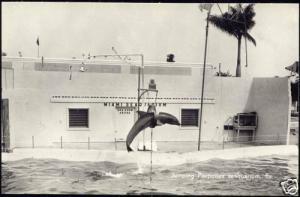 Miami, Fla., SeaQuarium Porpoises 1960s Dutch Ed. RPPC