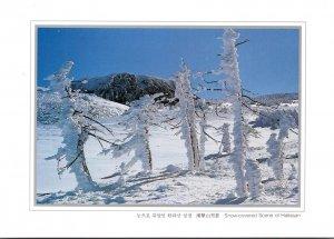 South Korea Snow Covered Scene Of Hallasan