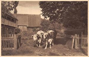 Czech Republic Gehoeft in Straussnitz Cows Old Cottage