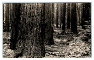 RPPC HUMBOLDT COUNTY, CA ~ BULL CREEK FLAT c1930s Car Patterson #952 Postcard
