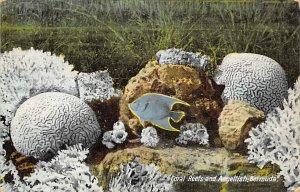 Fish/Sea Mammals Coral Reefs and Angelfish Bermuda 1931