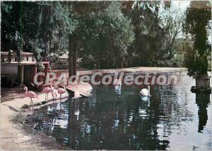 Postcard Modern Semi Romaneche (S & L) Zoological Park Condeminals Flamingos ...
