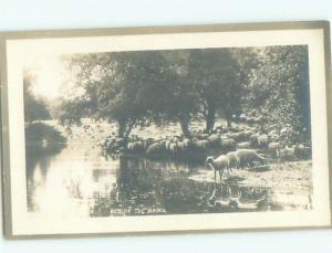 Old rppc ANIMAL SCENE Great Postcard AB1999