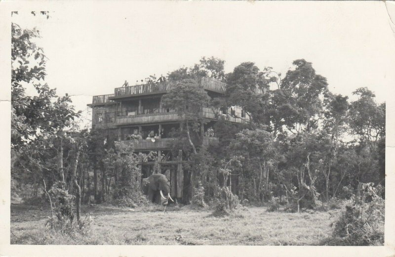 RP: NYERI , Kenyon , From the Tree Tops , Lodge