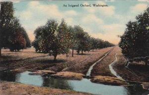 Washington Tacoma An Irrigated Orchard