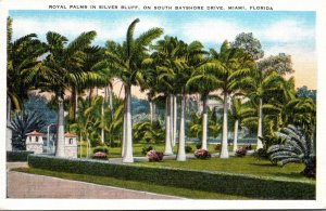 Florida Miami Royal Palms In Silver Bluff On South Bayshore Drive 1949