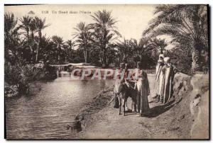 Old Postcard A Oued in & # 39Oasis Donkey Mule