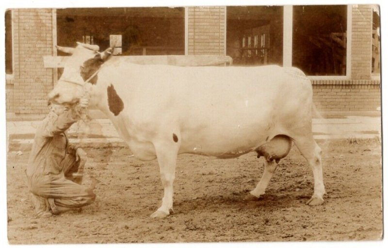 091420 VINTAGE RPPC REAL PHOTO POSTCARD BIG WHITE DAIRY COW WEST CONCORD MN 1921