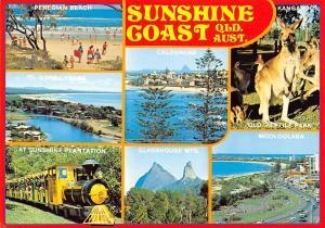 Australia, Sunshine Coast Caloundra Mooloolaba Train Peregian Beach Kangaroos