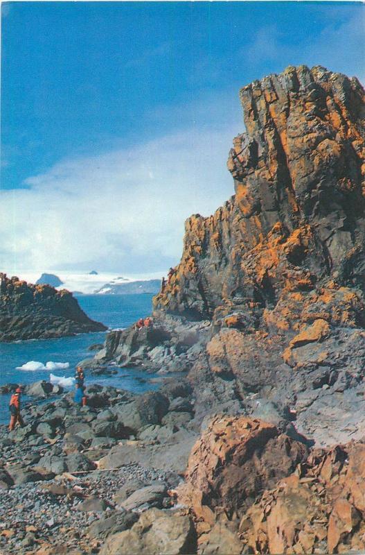 Penguin Island (Western Australia) Moss grows on naked rocks