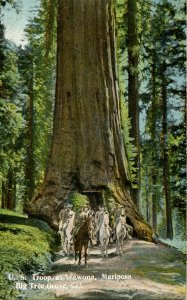 CA - Santa Cruz County. Big Tree Grove, U.S. Troops at Wawona