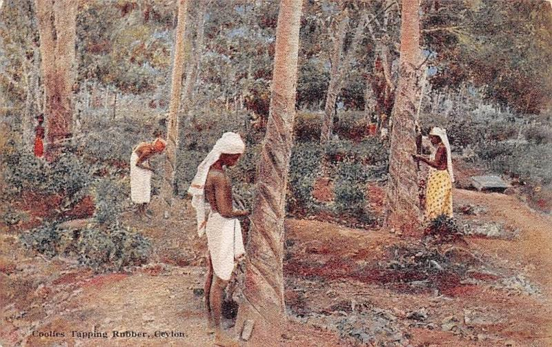 Ceylon, Sri Lanka, Coolies Tapping Rubber, Plate's Art Postcard