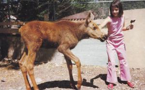 Girl with Calf Moose,  Wildlife Park,   B.C.,  Canada,   40-60s
