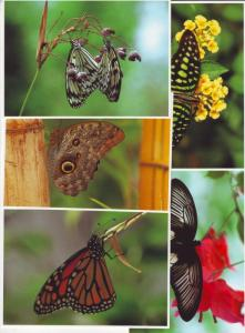 P193 JLs 5 postcard lg 4 1/4 x 6 butterfly excellent cond.