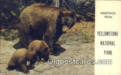 Yellowstone National Park Bear Postcard, Bear Post Card Old Vintage Antique  ...