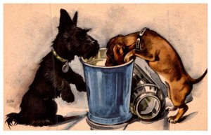 Dog , Puppies in Lunch pail