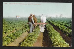 Farmer & Horses California Celery Fields Orange County California Unused c1910s