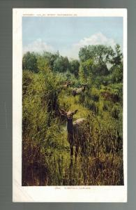 Deer in Woods by River Detroit Photographic Company RPPC Real Photo Postcard