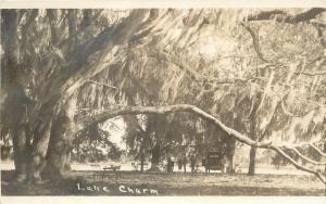 1920s? Real Photo PC; Lake Charm Victoria Australia Huge Mossy Tree Folks & Car