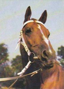 Czech Republic Horses Uslechtily teplokrevnik