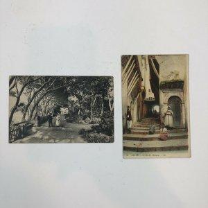 Lot Of 2 Algeria / Alger Jardin Chameau Postcards Color Vintage Antique
