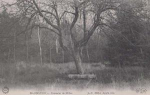 Barbizon Apple Tree Pommier De Millet Antique French Postcard