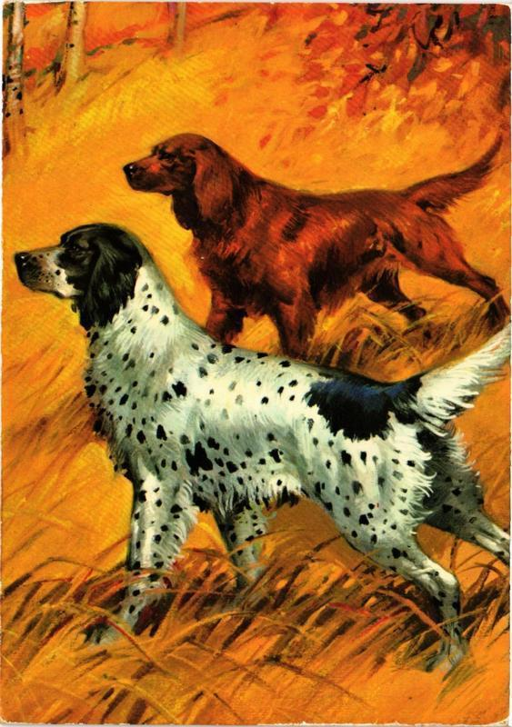 CPM English & Irish Setter CHIEN (717207)