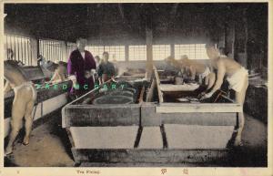 1908 Japan Postcard: Men in Underwear Firing Tea Leaves